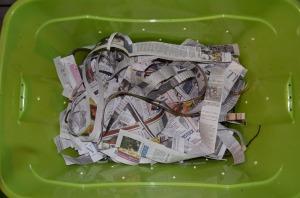 newspaper bedding worm bin compost vermicompost