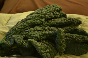 lacinato kale dino dinosaur organic green dark